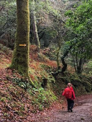 Dans les forêts de Galice
