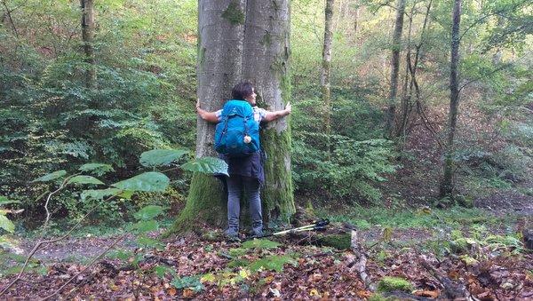 Dans les bois de Houyet
