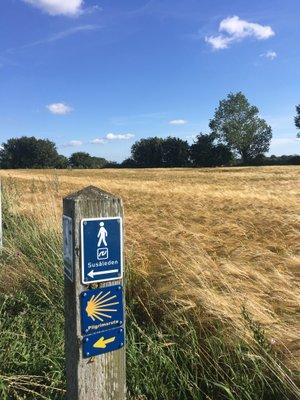Les chemins de saint Jacques au Danemark