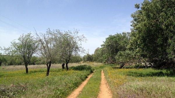 Vallée agricole (barrancol) sur la Via Algarviana
