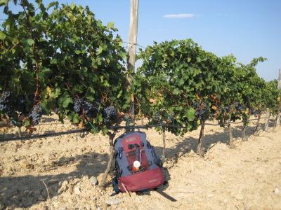 Vignobles de l'Emporda