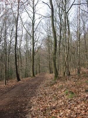 Les Bois du Sart Tilman