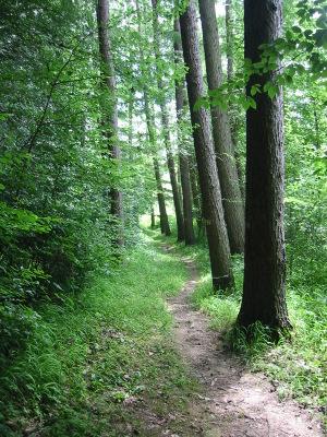 Sentier le long du Viroin