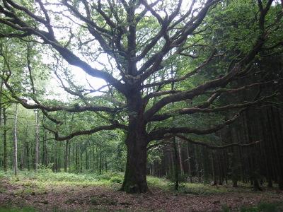 Rencontre avec un chêne