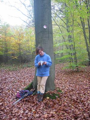 La forêt domaniale de Marche-les-Dames