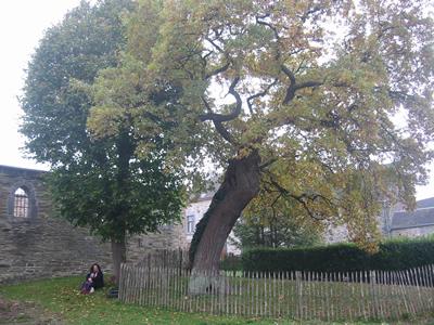 Chapelle en ruine et vieux chêne à Wartêt