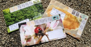 Mes lettres de pèlerine